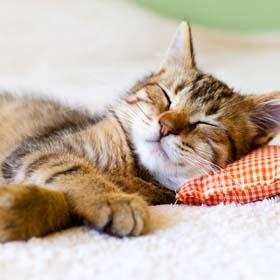 בית מלון לחתולים במרכז ,בית מלון לחתולים בבת-ים ,השגחה 24 שעות ביממה.