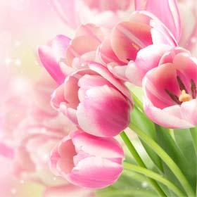 פרחים עונתיים ואקזוטיים פרחי הרצליה , בלונים מעוצבים פרחי הרצליה , קישוטי מכוניות לחתונות פרחי הרצליה.