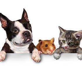 חנות חיות ברחובות ,מזון לבעלי חיים ברחובות, השכרת כלובים לבעלי חיים ברחובות.