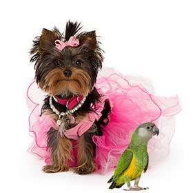 חנות חיות בפתח תקווה Pet Charizma. מספרה לבעלי חיים בפתח תקווה. וטרינר בפתח תקווה.